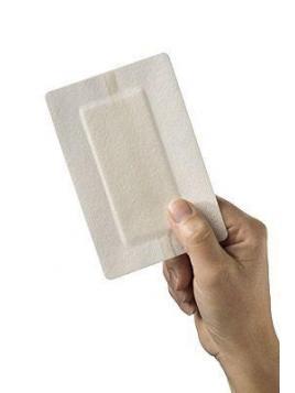 Polyporus